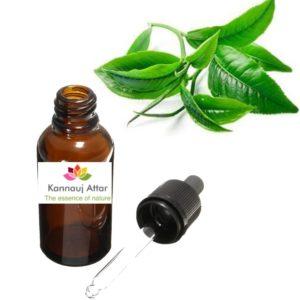 Tea Tree Essential Oil Manufacturer India