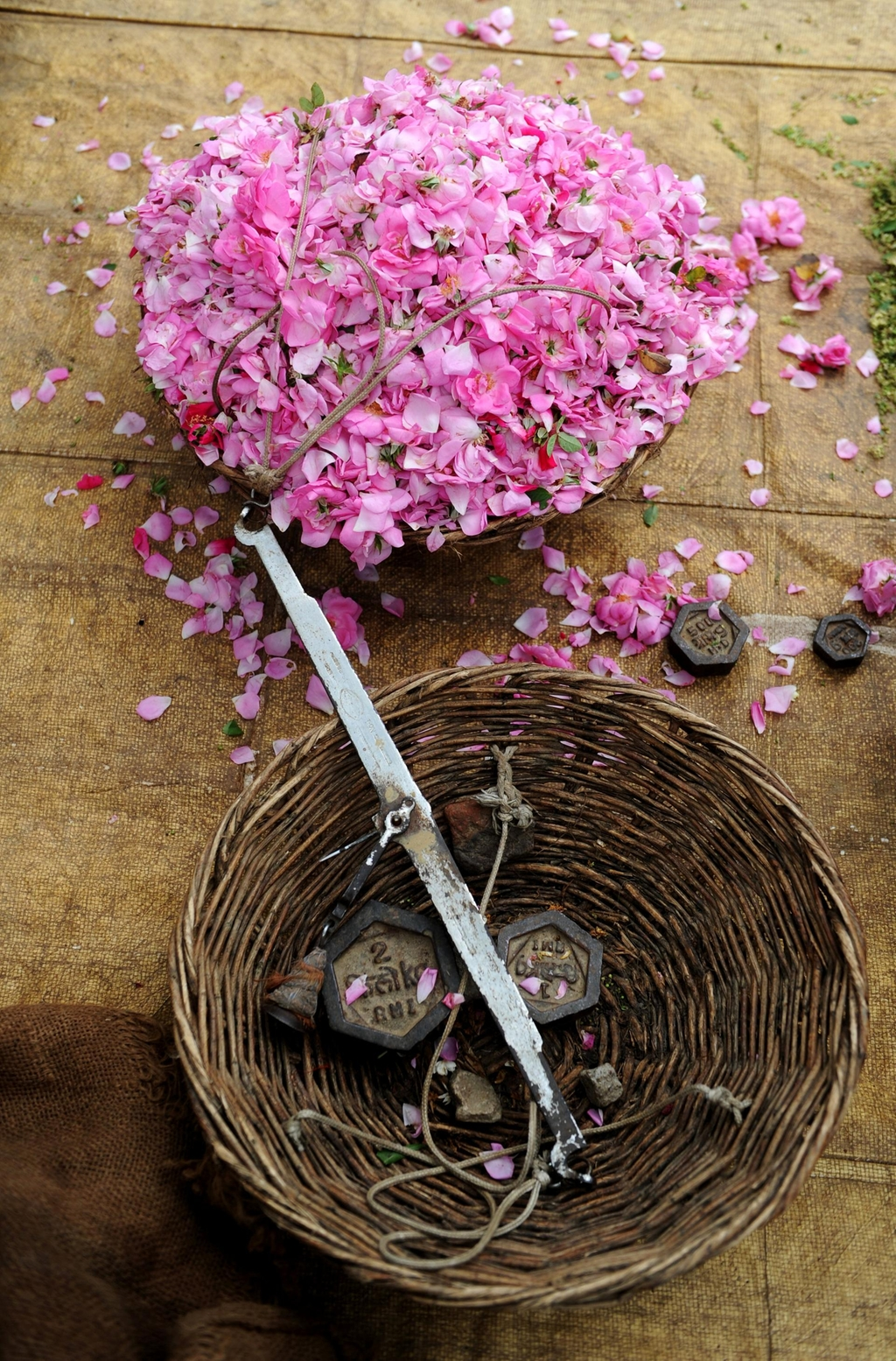 Making Rose Attar - Ruh Gulab Attar