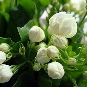 Natural Perfumes Scent Family